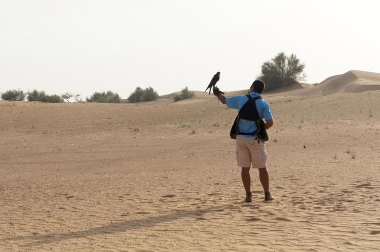 Dubai Desert Safari falcon