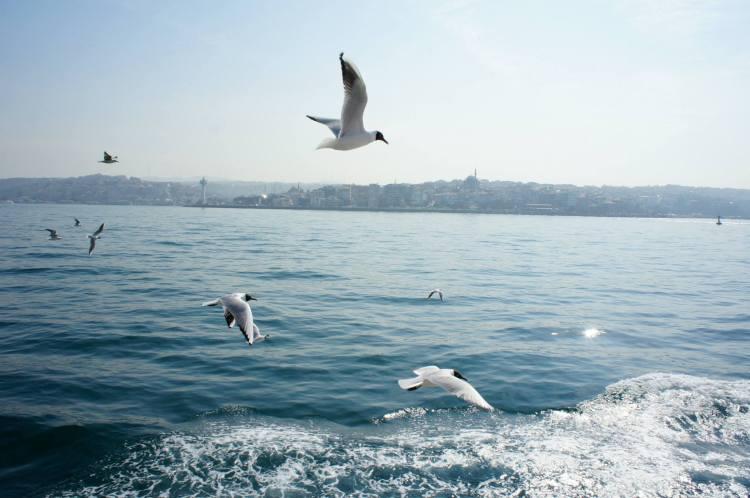 Istanbul Bosphorus seagulls