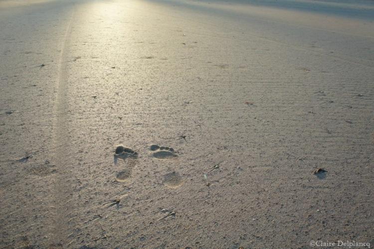brazil-beach-sand