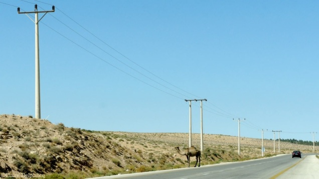 jordan-roadtrip-camel