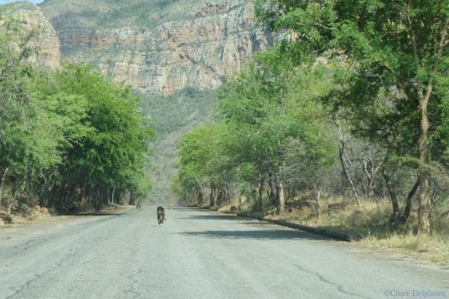 south-africa-roadtrip-monkey
