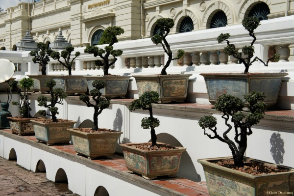 Grand Palace Bangkok Thailand Bonsai