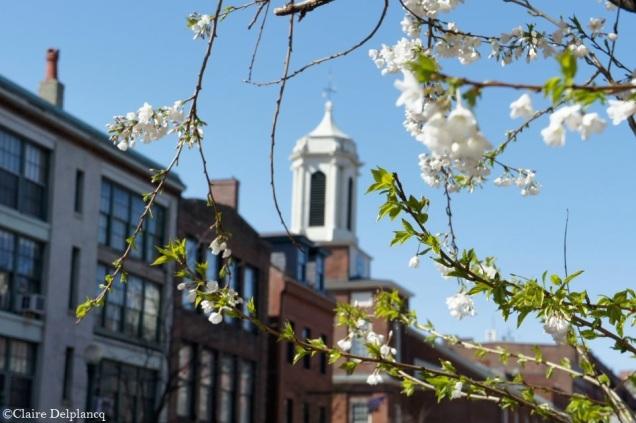 usa-boston-spring