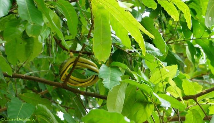brazil-rio-de-janeiro-snake