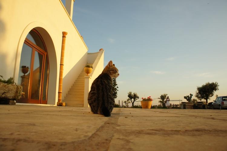 CAt in Tenuta Yala Puglia