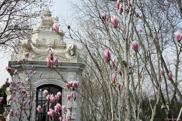 Turkey-Istanbul-spring-blossom