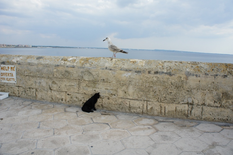 Seagull and cat in Gallipoli