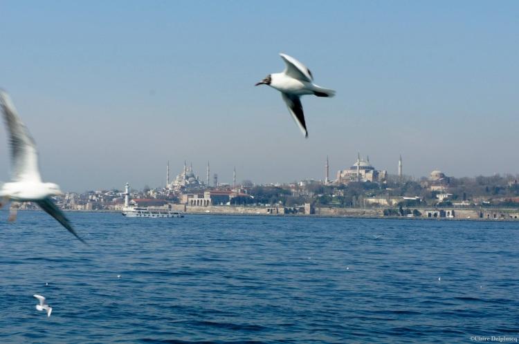Turkey-Istanbul-seagull