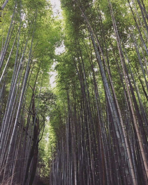 Japan-Kyoto-Bamboo-forest-iphone