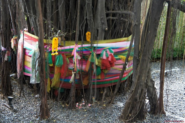 Thailand-Bangkok-tree