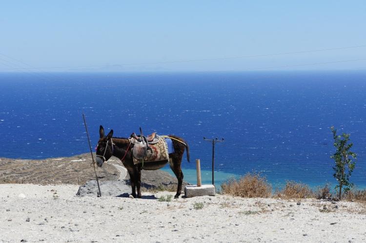 Santorini Oia hike donkey