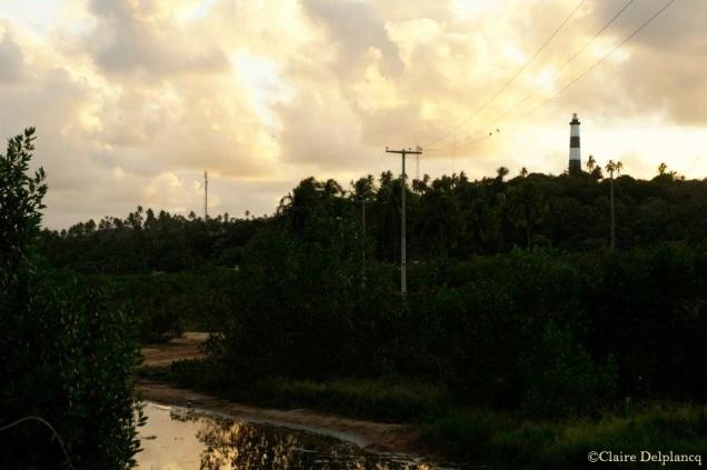 Brazil-jungle-sunset-2