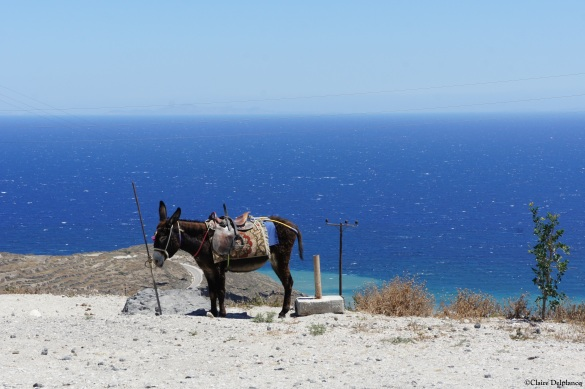 Santorini greek donkey