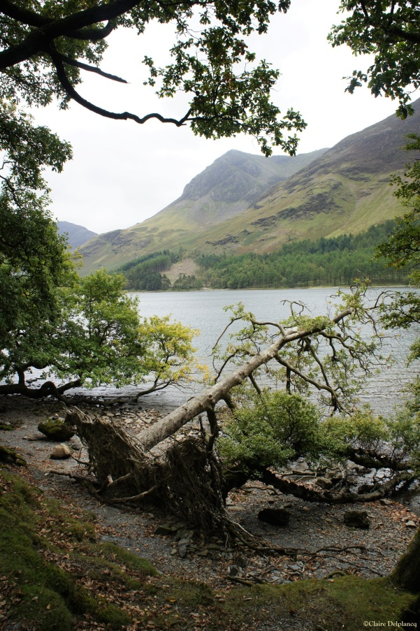 Tree Lake District Cumbria