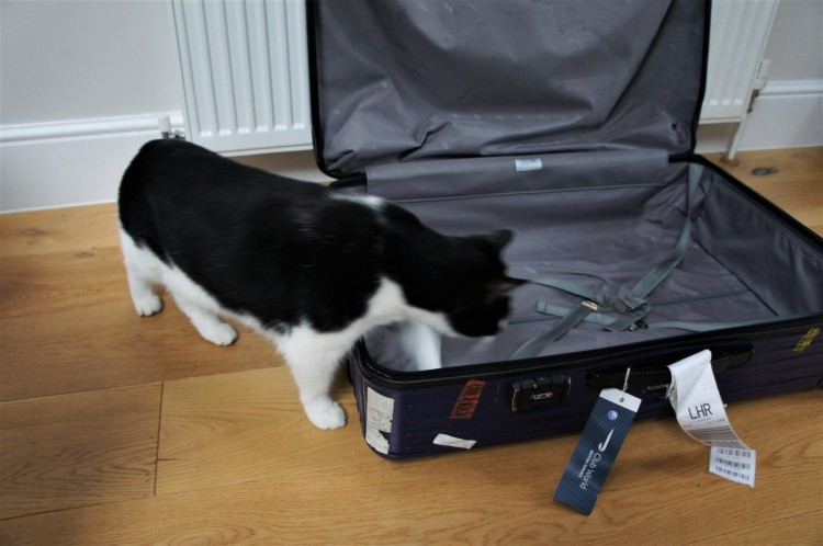 Rimowa suitcase and cat