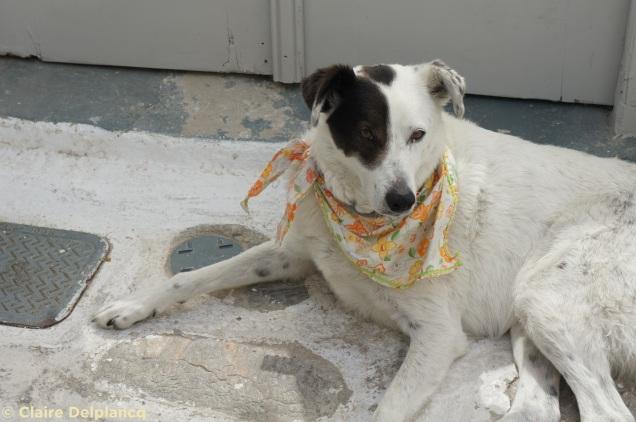 Dog in Parikia