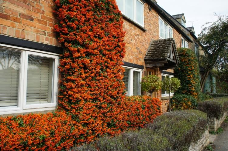 Orange house in Kingham