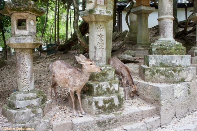 Deer greeting people in Nara Japan