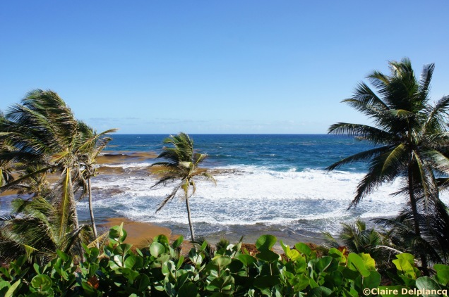 Breakfast view at the Round House in Bathsheba