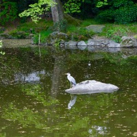 A heron in Kyoto