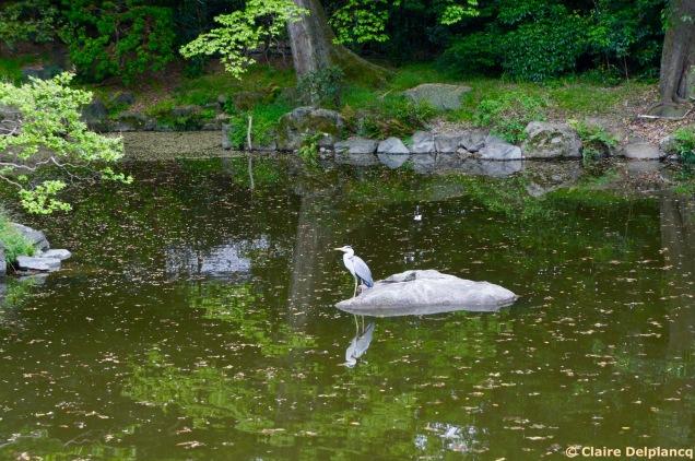 Heron in Kyoto