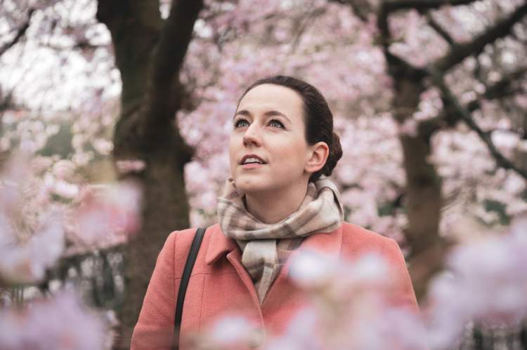 Cherry blossoms in Regent's Park
