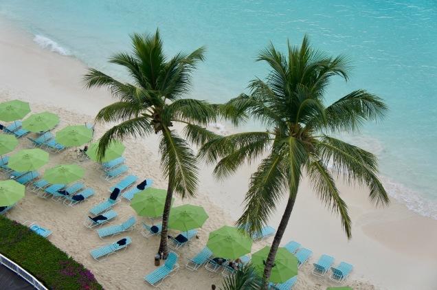 Palm trees on Pebbles Beach