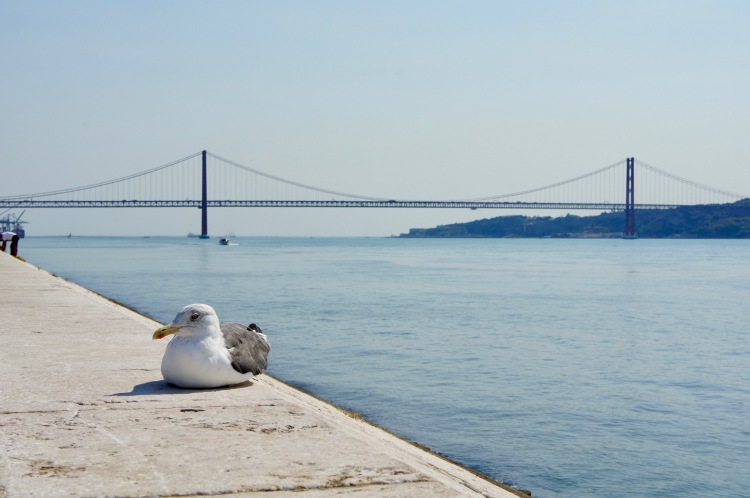 Tagus seagul Lisbon