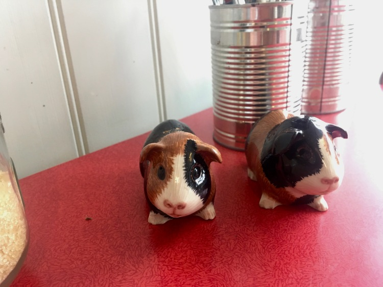 Arlo and Moe Guinea Pigs salt and pepper