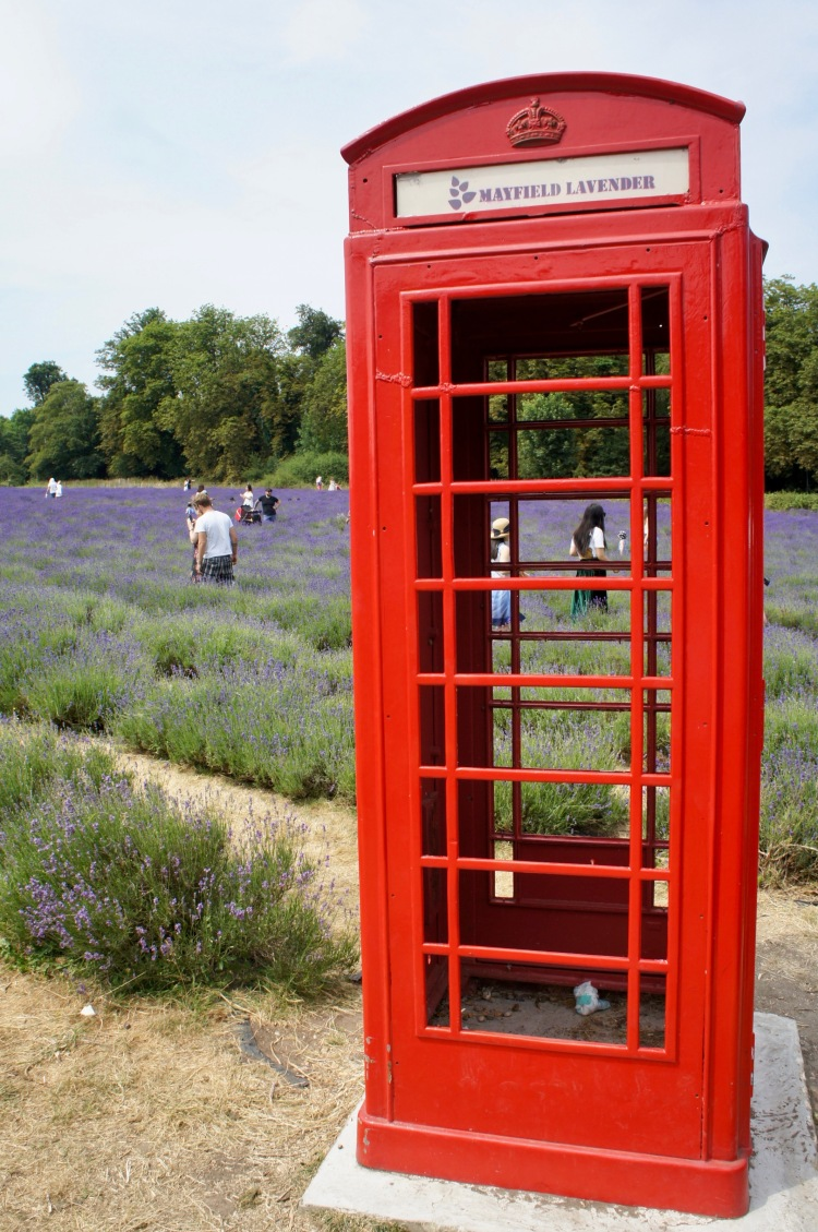 Phone box Mayfield Lavender