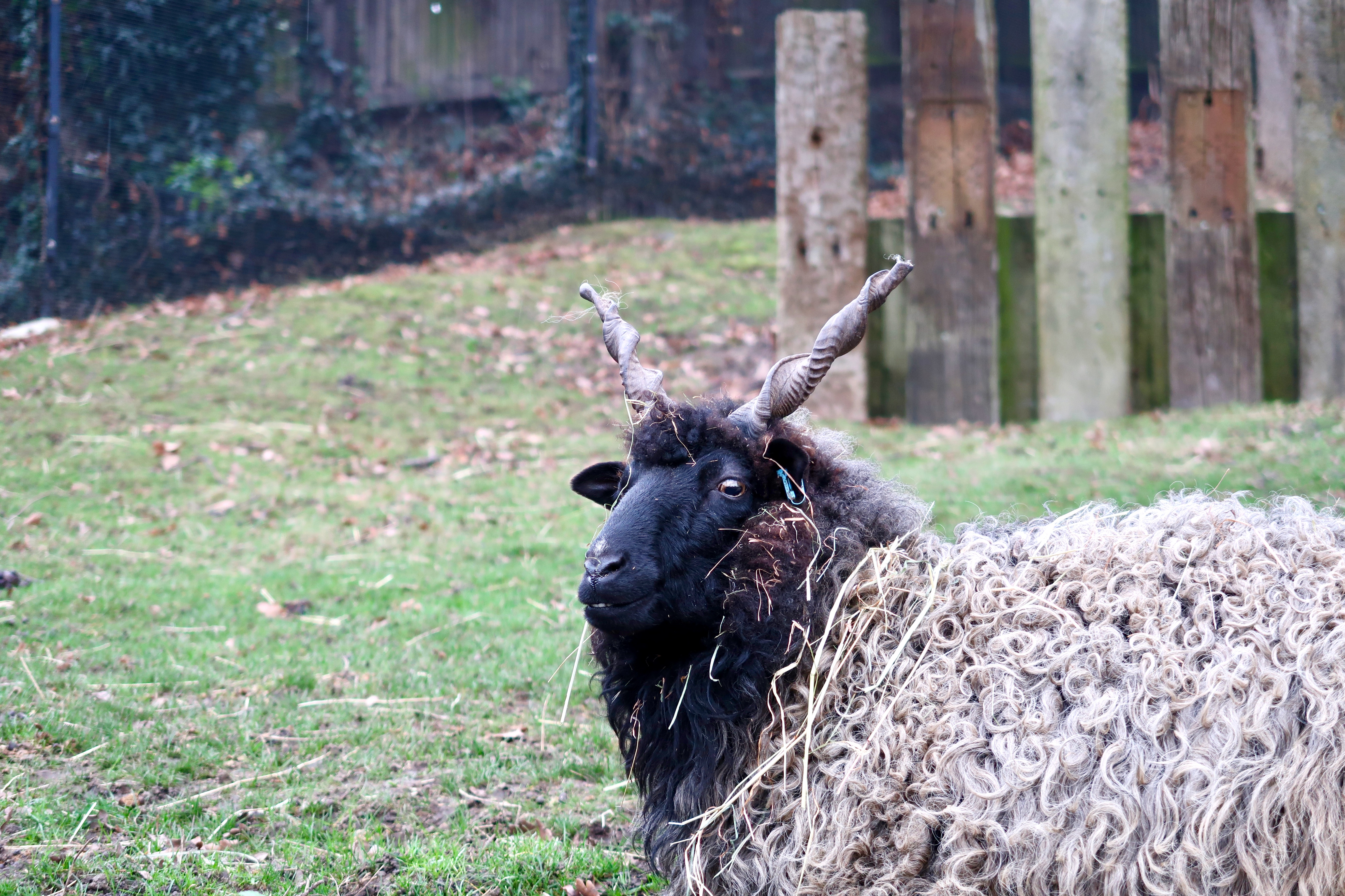 The Horniman Museum and Gardens Animal walk