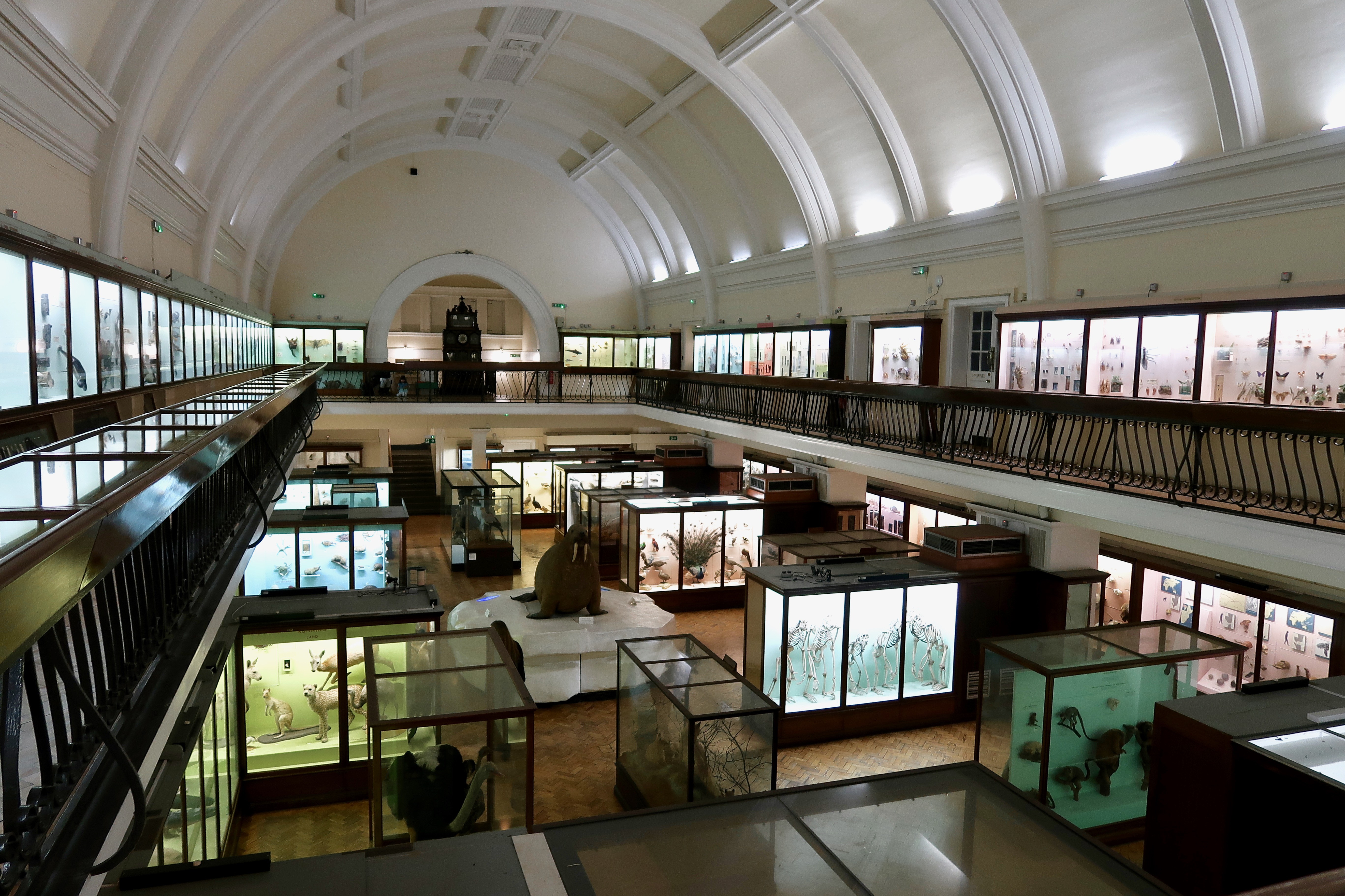 The Horniman Museum Natural History Gallery