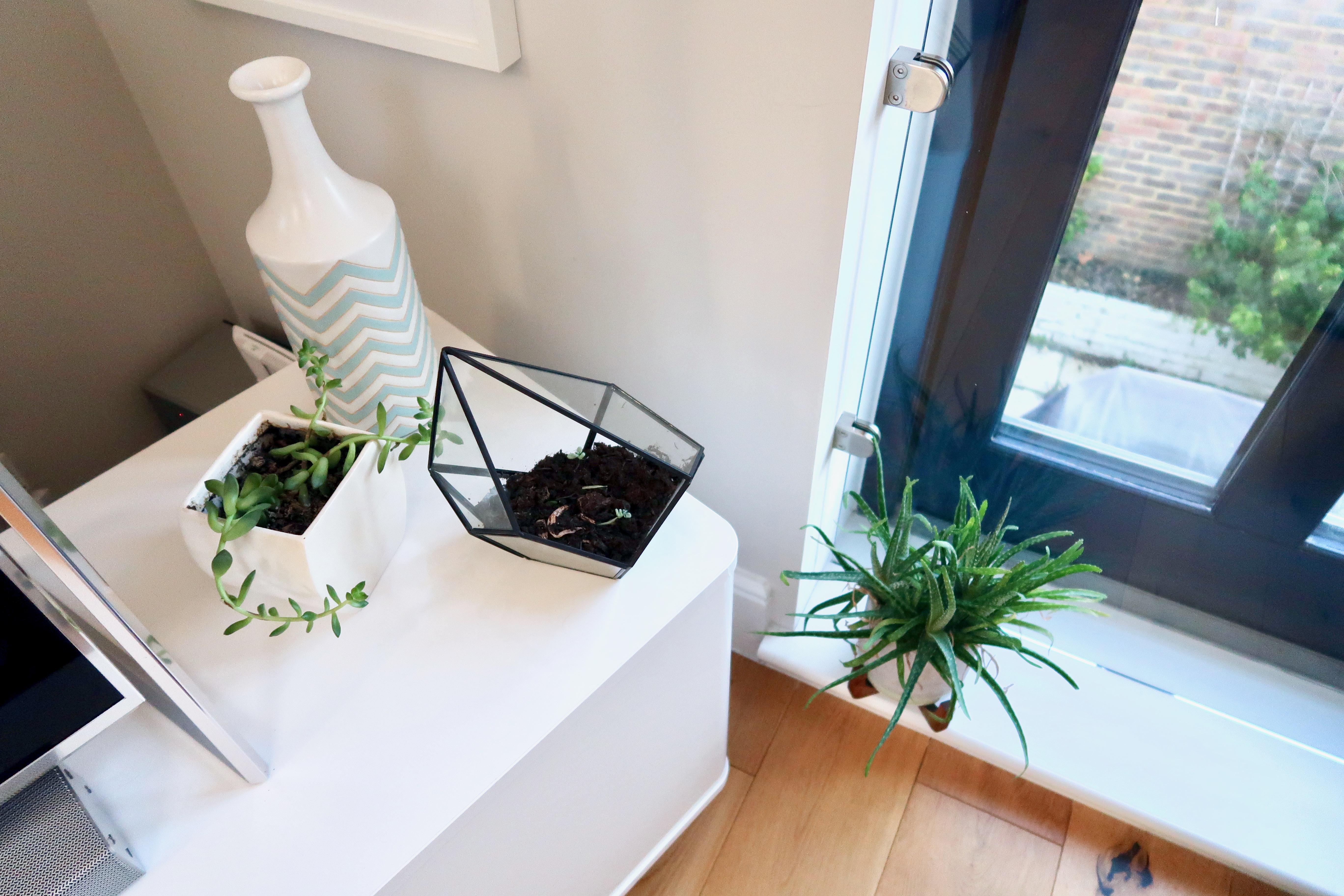 Living-room indoor plants
