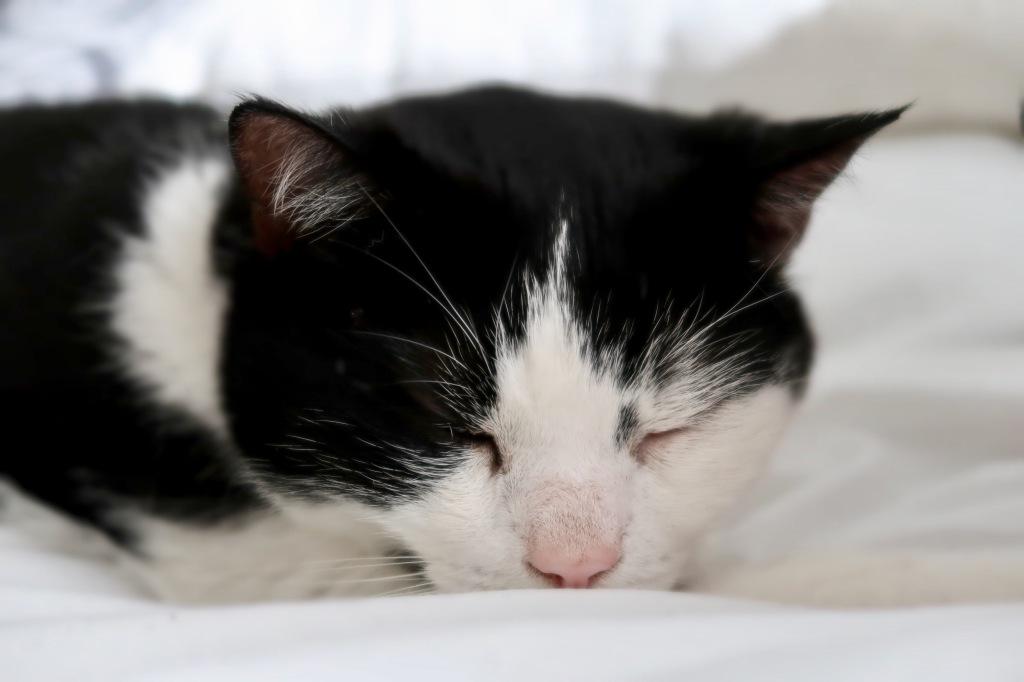 Adopt Don't Shop - Adopting a rescue cat